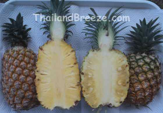 Prachuap Khiri Khan grow the most Pattawia pineapples in Thailand.