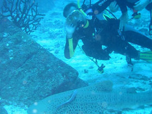 Scuba diving in Phuket with beautiful fishes