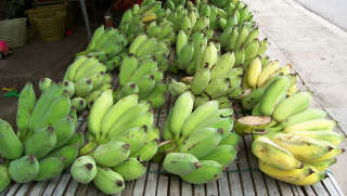 Find tropical fruits in Thailand including many kinds of bananas