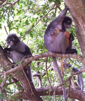 Monkeys in Ao Manao, Thailand