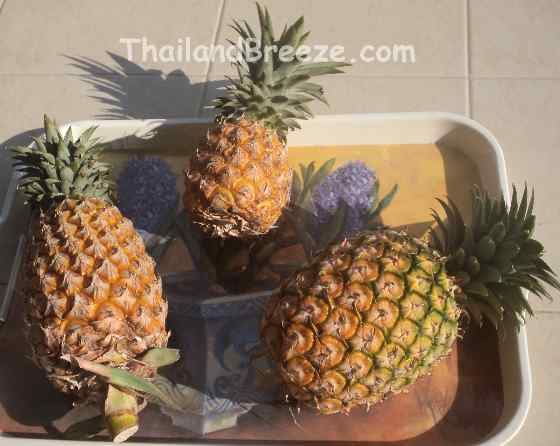 Phuket, Pu-Lae and Pattawia are common pineapple breeds grown in Thailand.